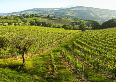 Bistro CheStoria Marche Italien
